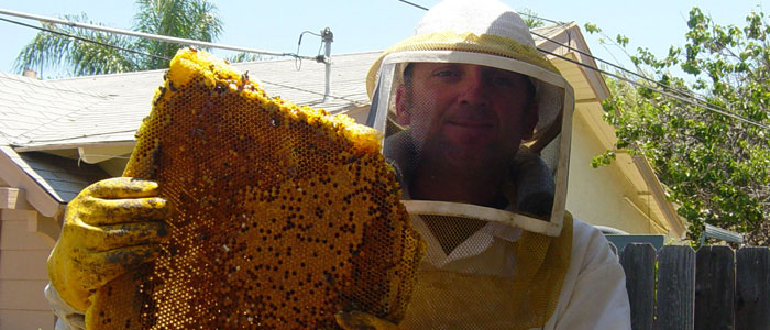 Oceanside Bee Removal Guys Tech Michael