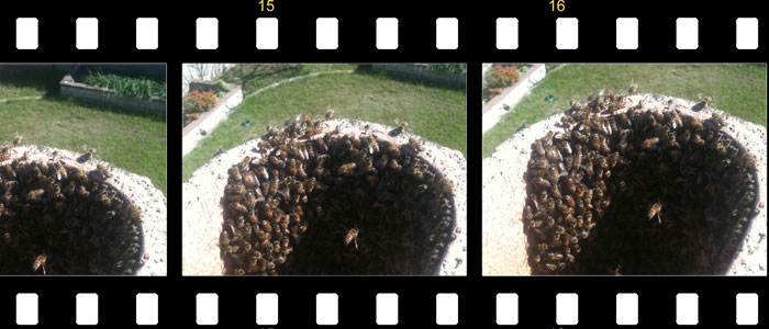 Bee Removal Movies