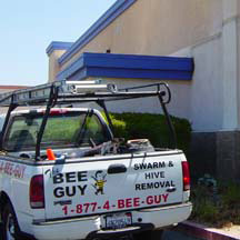 Oceanside Bee Removal Guys Service Truck